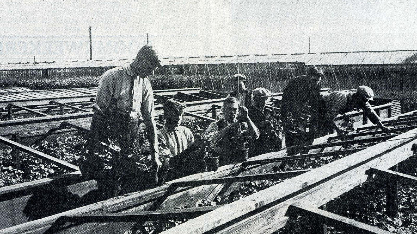 Koop Maarse - einde Uiterweg rond 1928